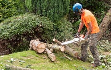 additional services offered by Marlow Common tree surgeons