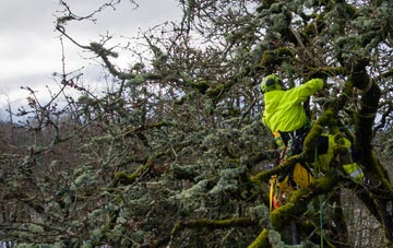 experienced Marlow Common arborists are needed