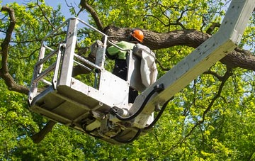 tree surgery services offered