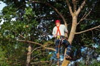 Marlow Common tree crown reduction services