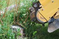 free Marlow Common tree stump grinding quotes