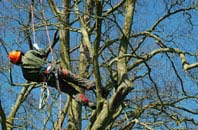 Marlow Common tree surgery services